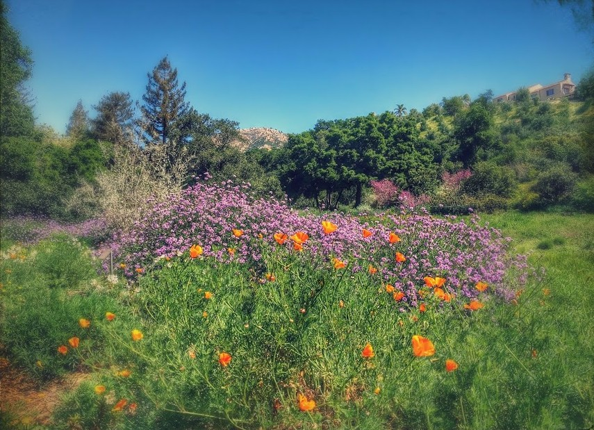a day trip to santa barbara and a few minutes at oprah 39 s