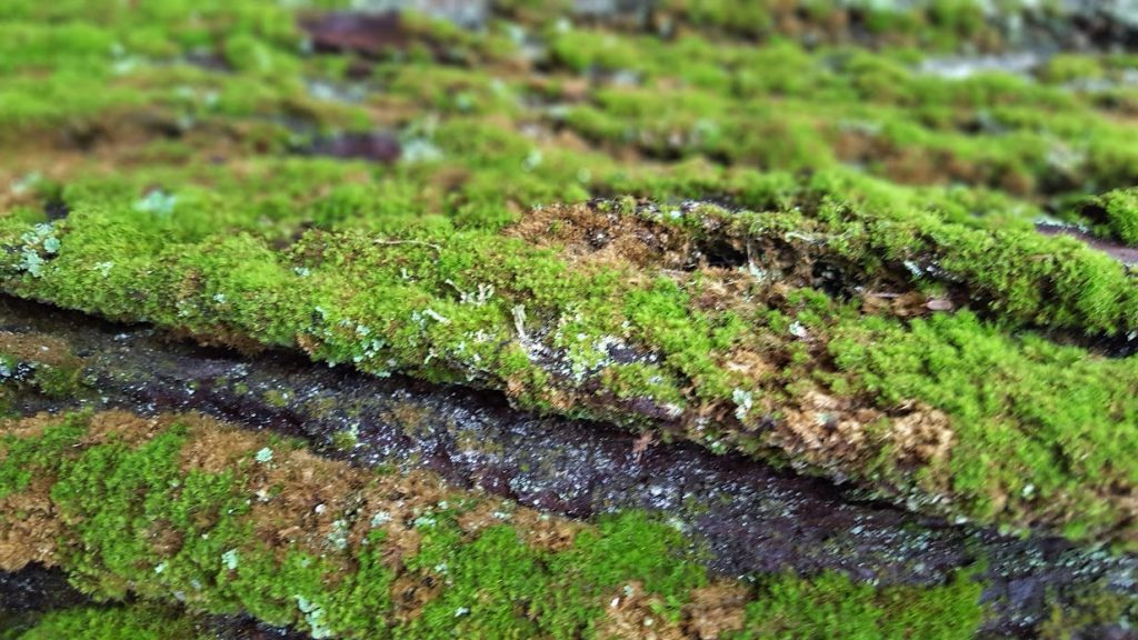 Green moss growing at Hocking Hill State Park