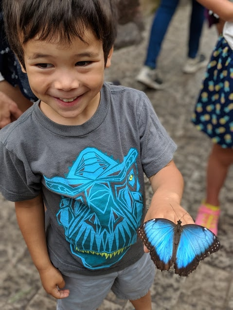 boy holding blue butterfly at niagara butterfly conservatory