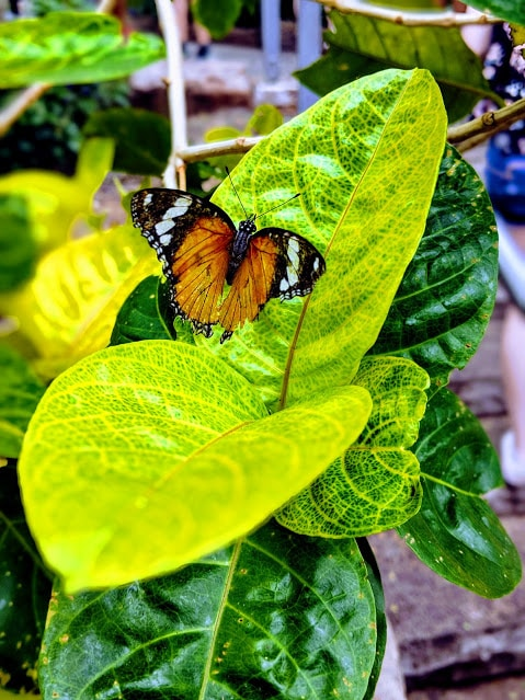 orange spotted butterfly on green leaf