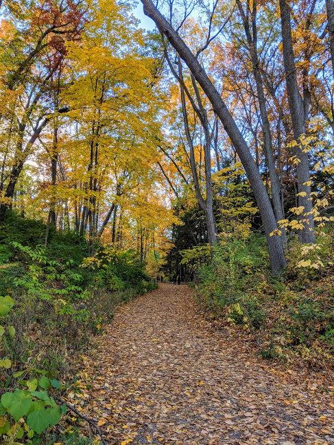 Fall foliage on the walking path at Nichols Arboretum in Ann Arbor